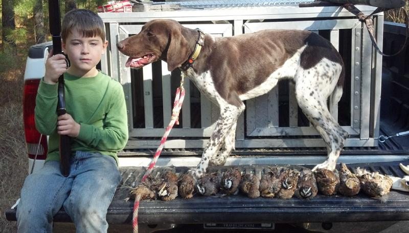 Ten month old Rage taking Caulder on his first Quail hunt