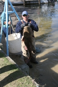 Stan Pierce 48.2lbs 1st place Big Fish Hills Landing Catfish Tourn. Santee